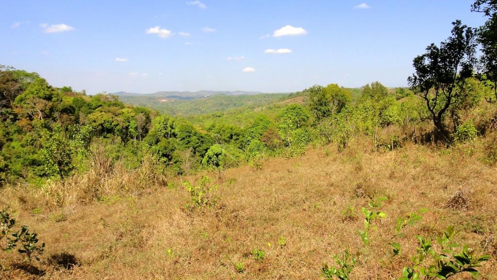 Vue plongeante sur la jungle du Mondolkiri à la saison sèche
