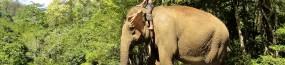 Journée avec les éléphants de la jungle du Mondolkiri