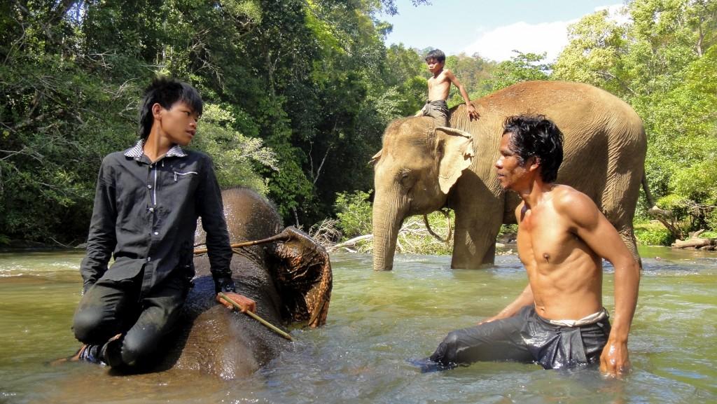 Les cornacs lavent les éléphants dans la rivière