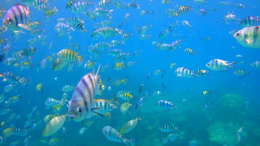 Un souvenir impérissable, nager entre des milliers de poissons multicolore, on adore !
