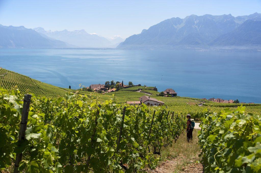 Au milieu des vignes en terrasse